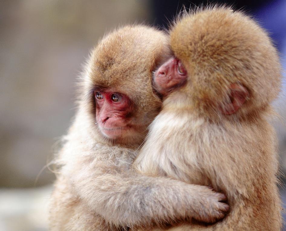 fotografía de Monos abrazandose