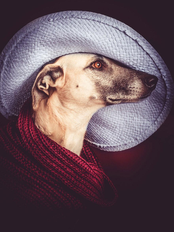 Elke Vogelsang photography dogs oldskull 10