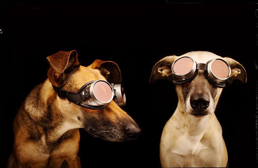 Elke Vogelsang photography dogs oldskull 11