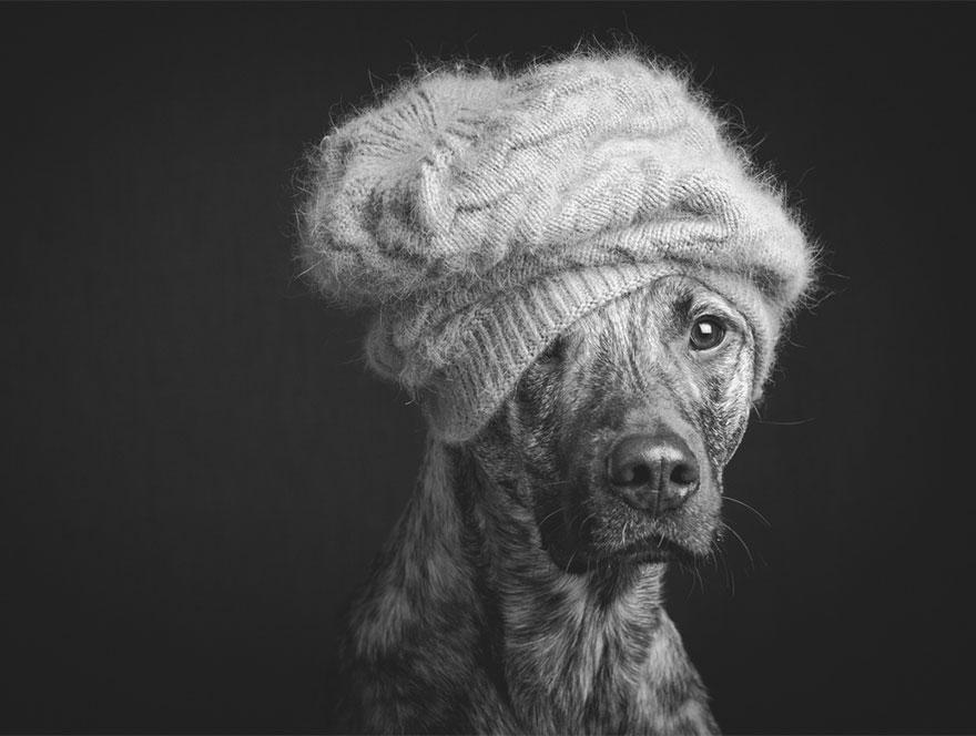 Elke Vogelsang photography dogs oldskull 12