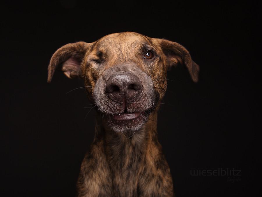 Elke Vogelsang photography dogs oldskull 14