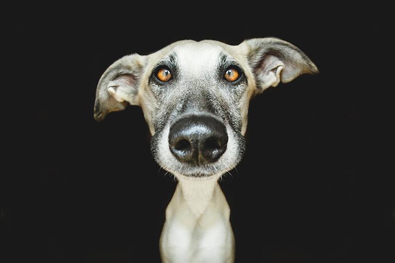 Elke Vogelsang photography dogs oldskull 4