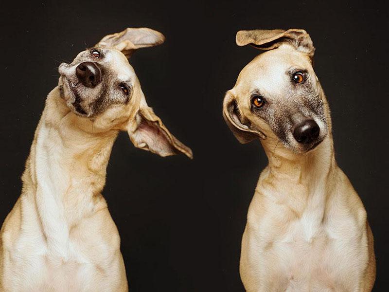 Elke Vogelsang photography dogs oldskull 5