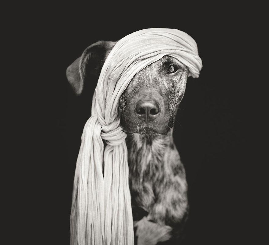 Elke Vogelsang photography dogs oldskull 9