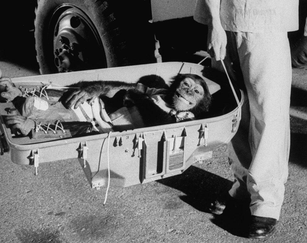 Ham_primer_chimpancé_astronauta-fotografia-oldskull-01