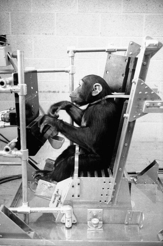 Ham_primer_chimpancé_astronauta-fotografia-oldskull-08