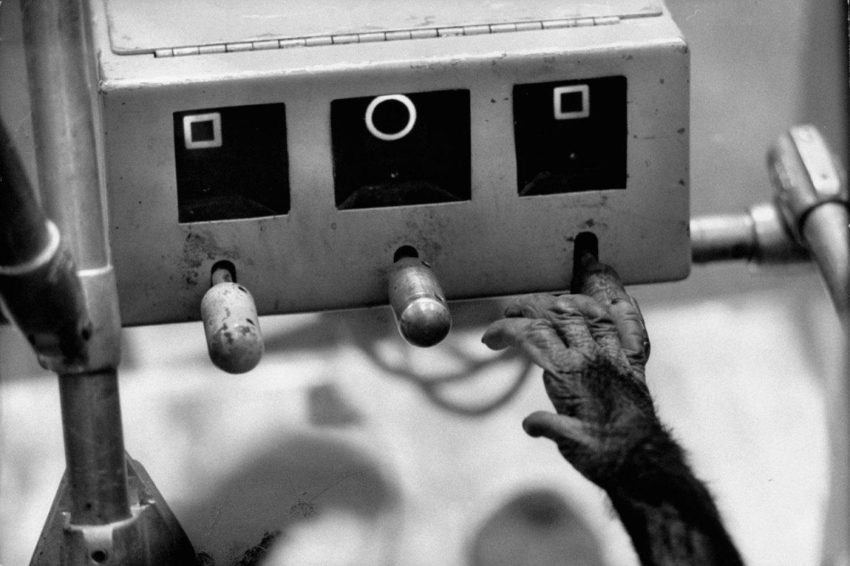 Ham_primer_chimpancé_astronauta-fotografia-oldskull-09