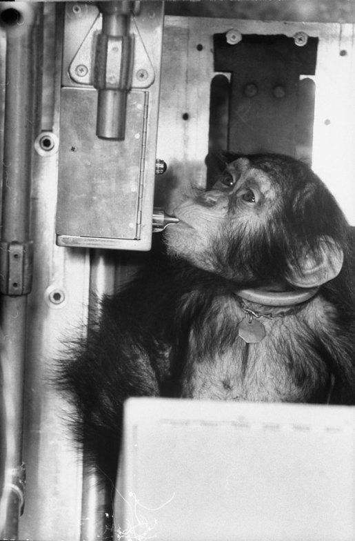 Ham_primer_chimpancé_astronauta-fotografia-oldskull-11