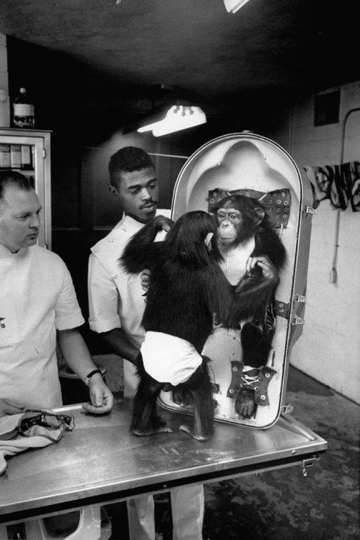 Ham_primer_chimpancé_astronauta-fotografia-oldskull-13