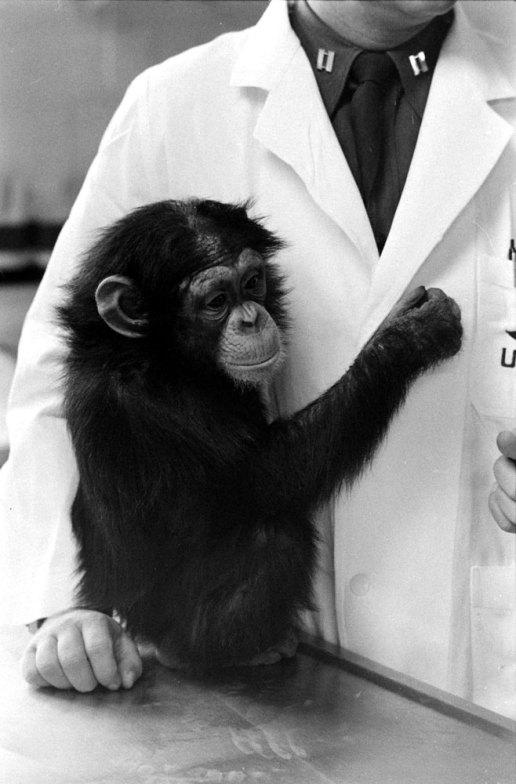 Ham_primer_chimpancé_astronauta-fotografia-oldskull-18
