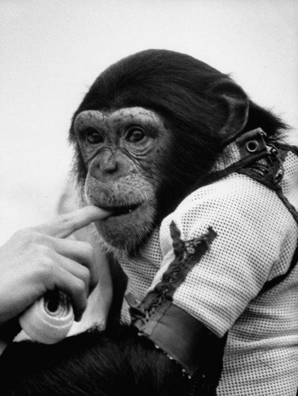 Ham_primer_chimpancé_astronauta-fotografia-oldskull-20
