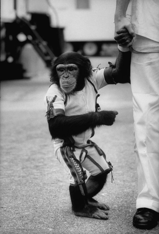 Ham_primer_chimpancé_astronauta-fotografia-oldskull-23