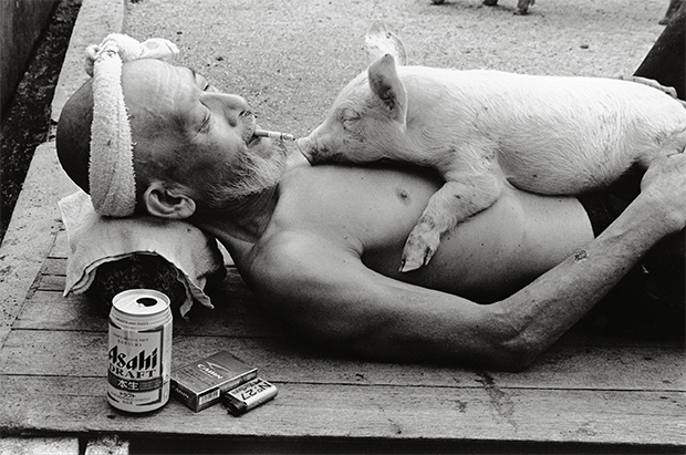 farmer and pigs photography oldskull 2