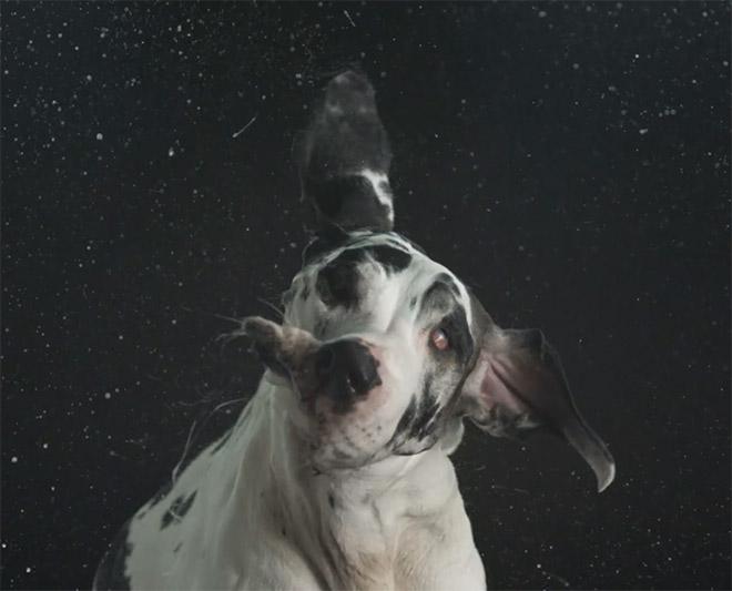Perros-fotografia-oldksull-08