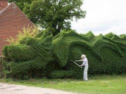 Un dragón podado en el jardín