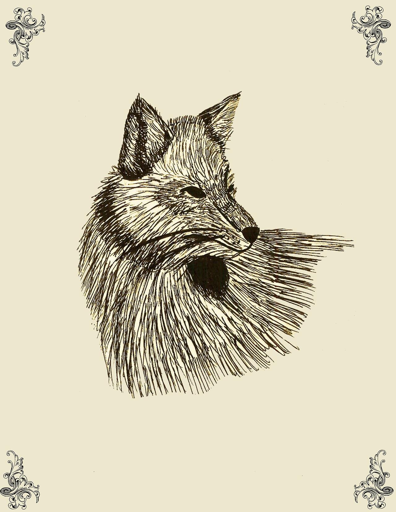 lefay-illustration-oldskull-5