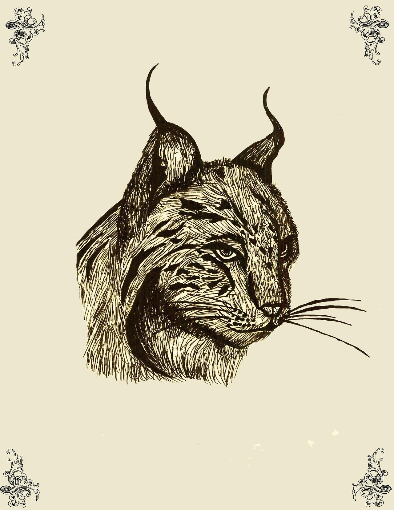 lefay-illustration-oldskull-6