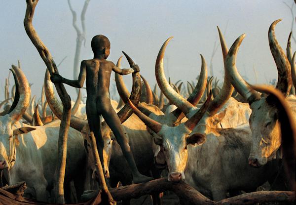 Dinka Child Climbimg among Horns