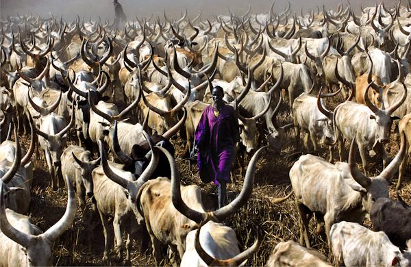 Dinka Herder in Purple