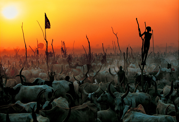 Dinka Cattle Camp
