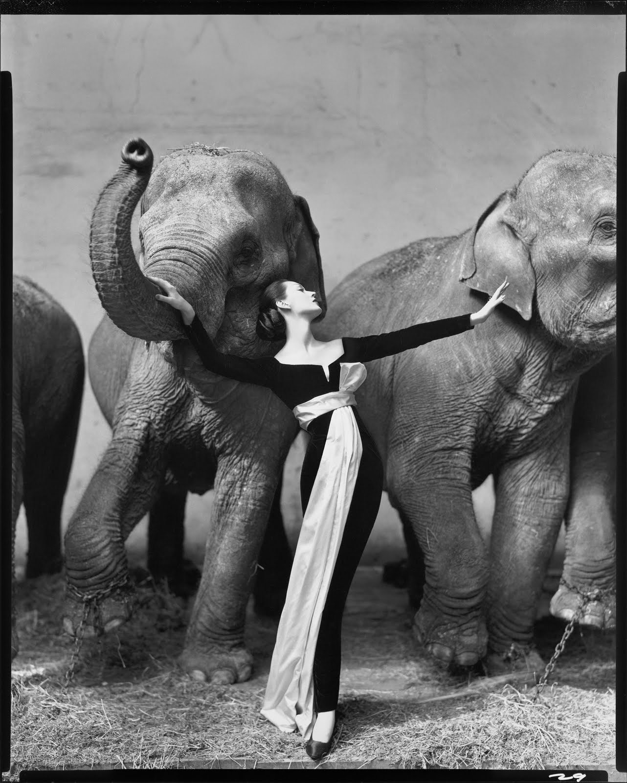 most-expensive-photograph-dovima-with-elephants-1955-richard-avedon-10