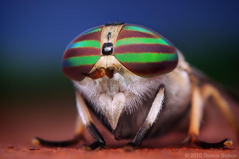 Fotografía macro de insectos