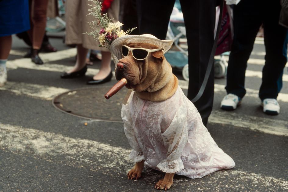 perro disfrazado en las calles de nueva york