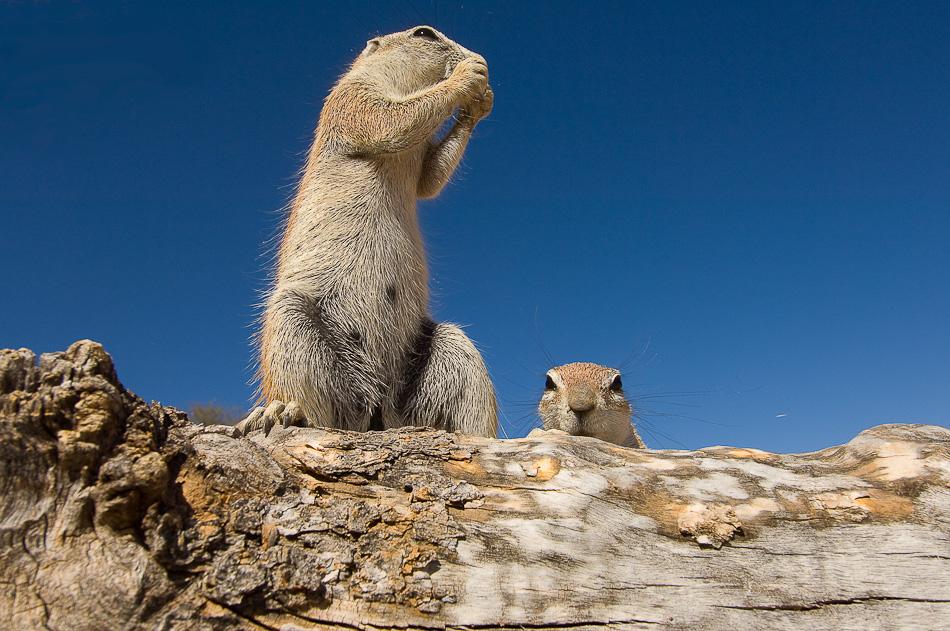 STEFANO UNTERTHINER animals photography 4