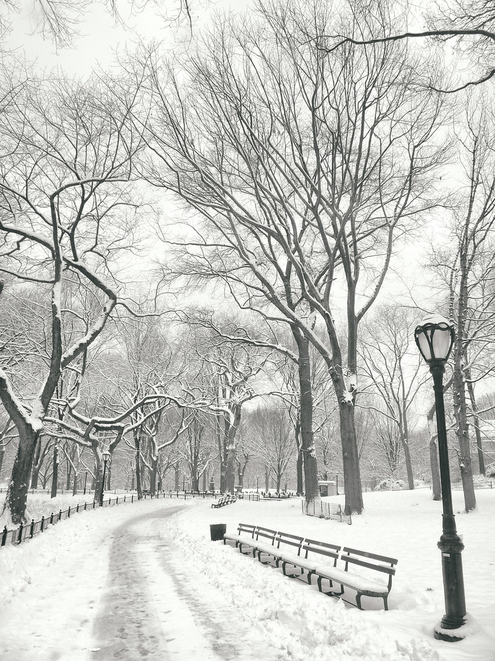 """""""Central Park Winter - Snow in the Afternoon - New York City"""""""