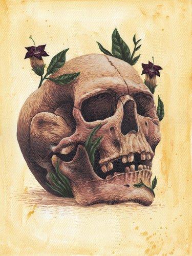 ilustración de calavera mexicana