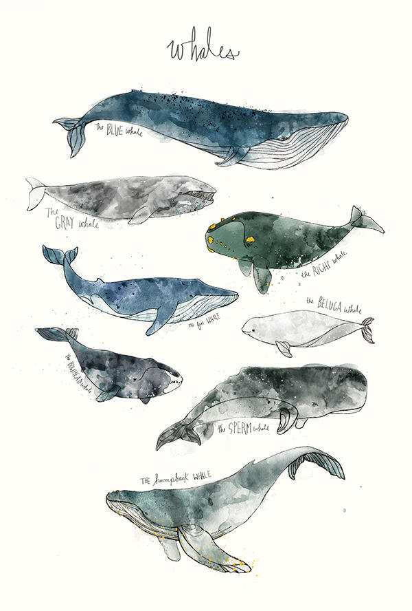 amy hamilton animals illustration 8