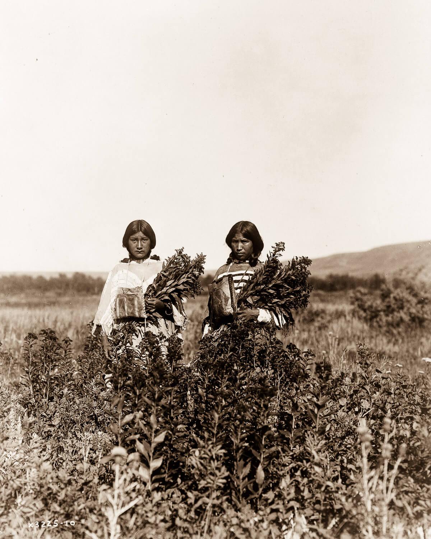 Indios nativos cultivando