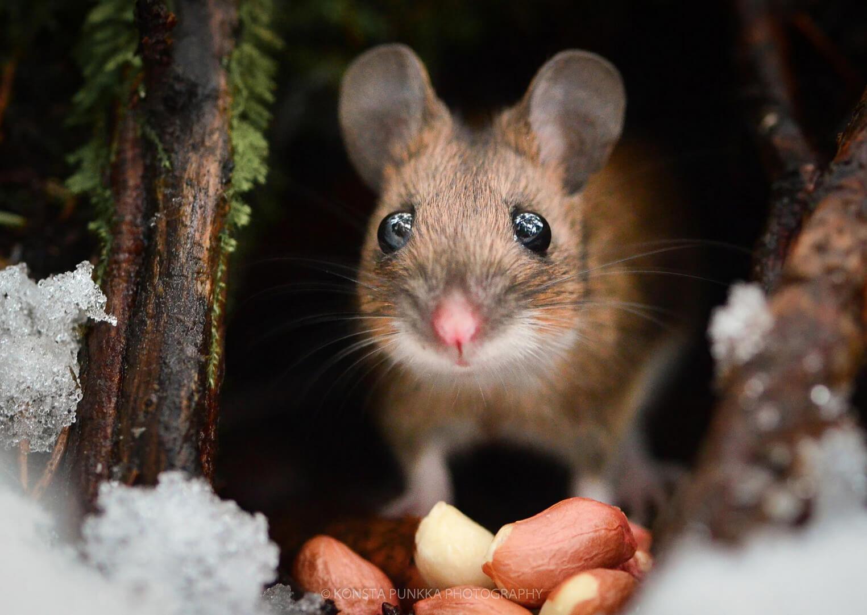 fotografía de un ratón asomandose