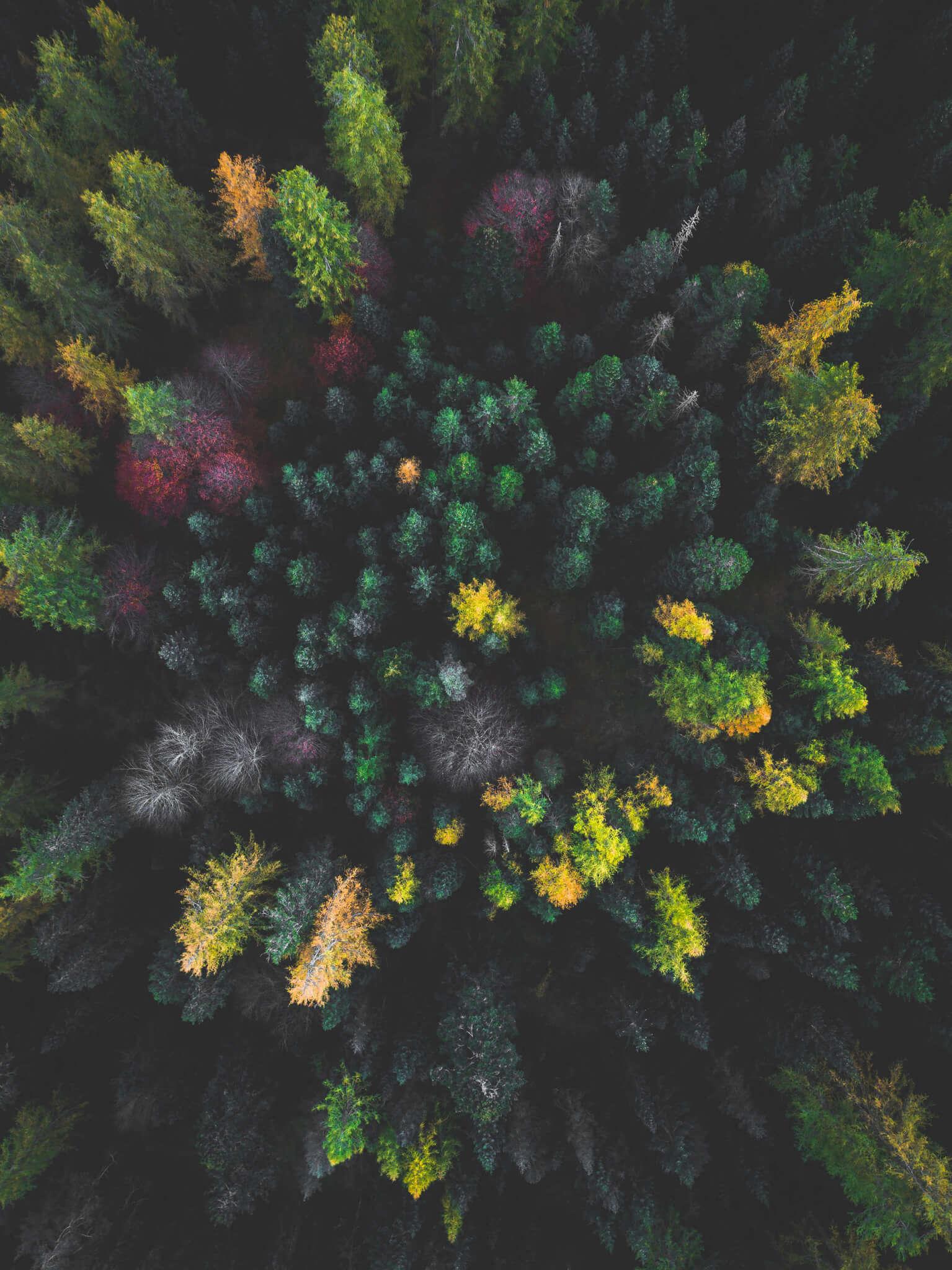 bosque fotografía aérea
