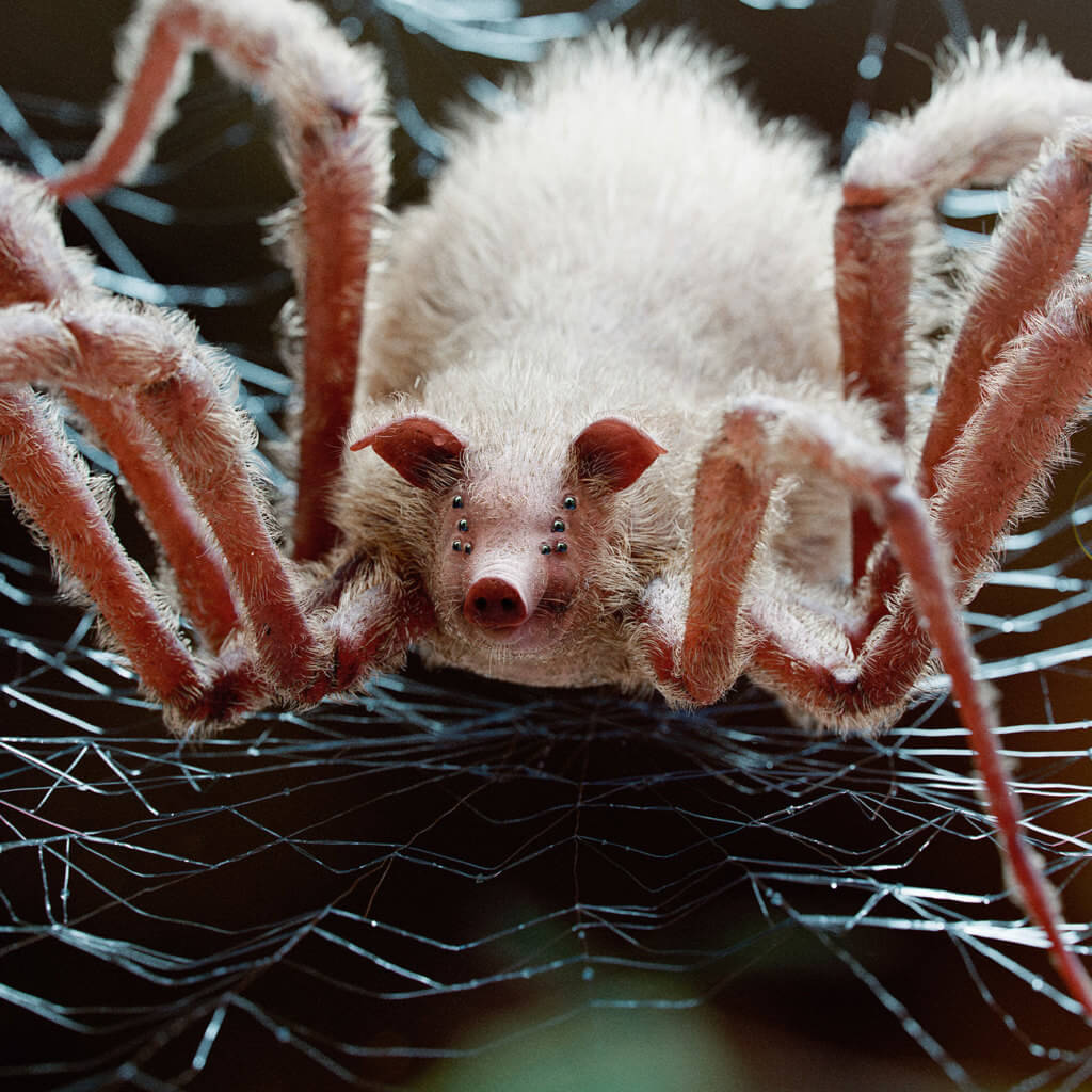 cerdo araña mudbug