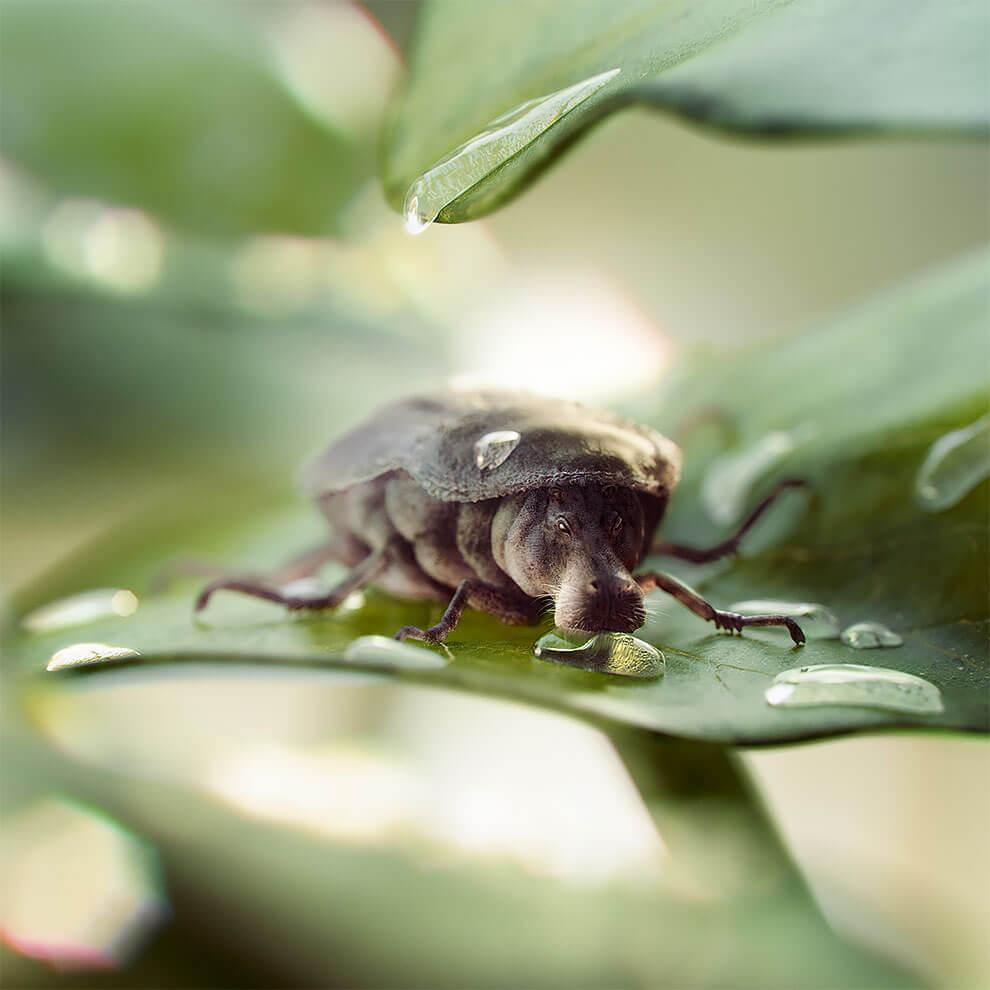 bichopopotamo midbug cristian girotto