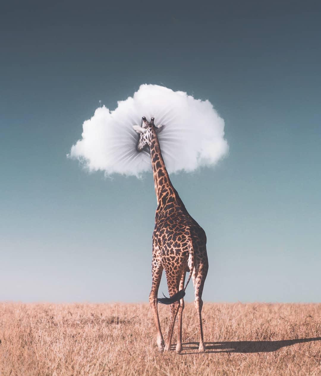jirafa con nube de almohada
