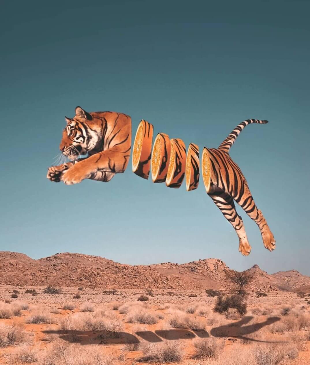 tigre naranja Ronald Ong
