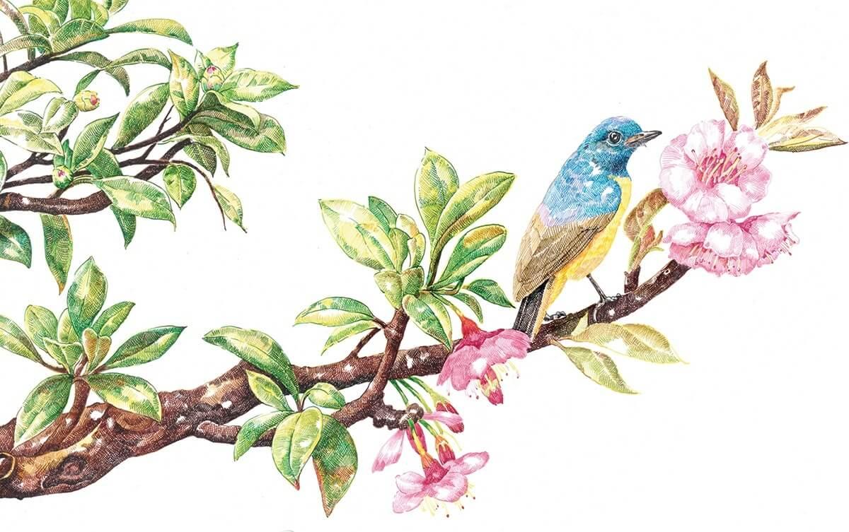 cherry blossom bird summer zhao na