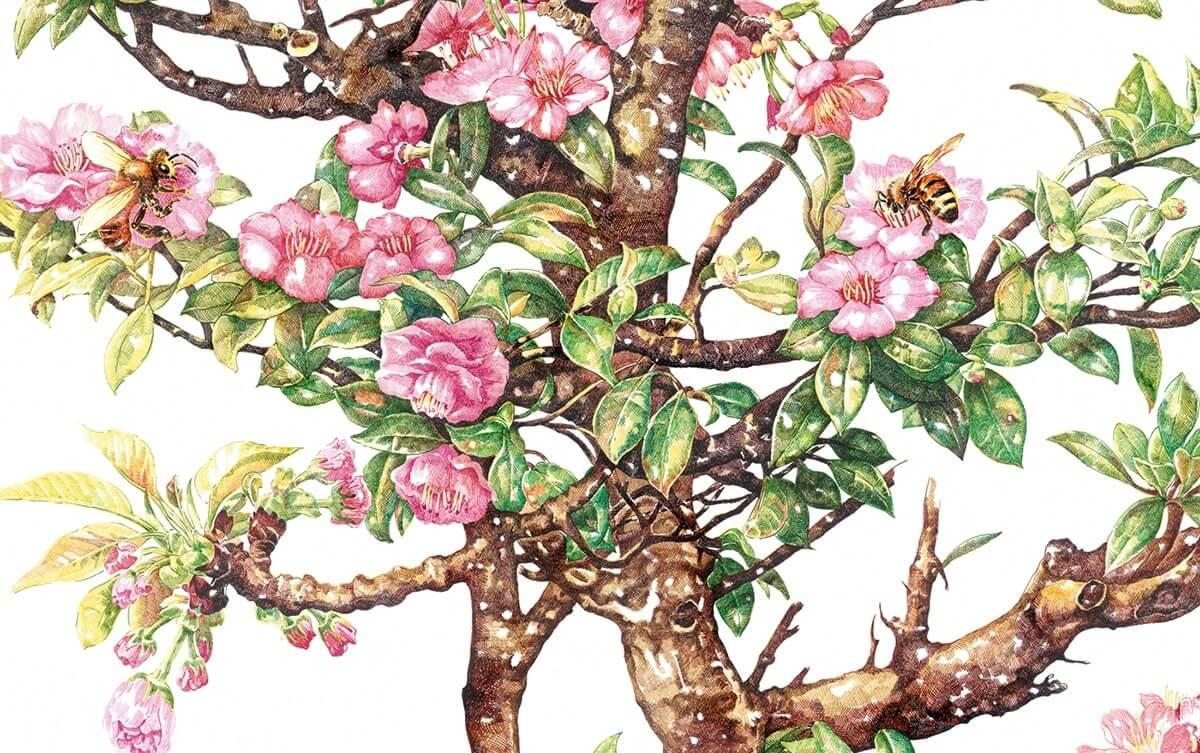 verano floreciendo con abeja zhao na