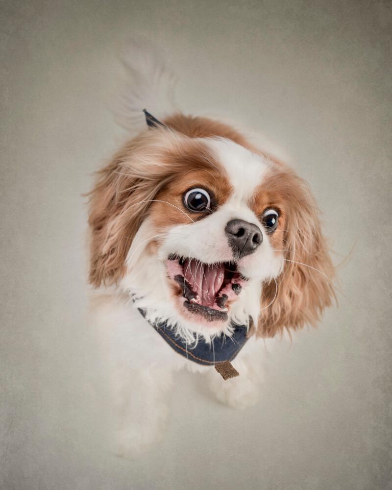 Belinda Richards fotografia de mascotass