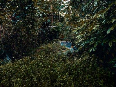 La fotografía de coches tragados por la naturaleza de Thomas Strogalski