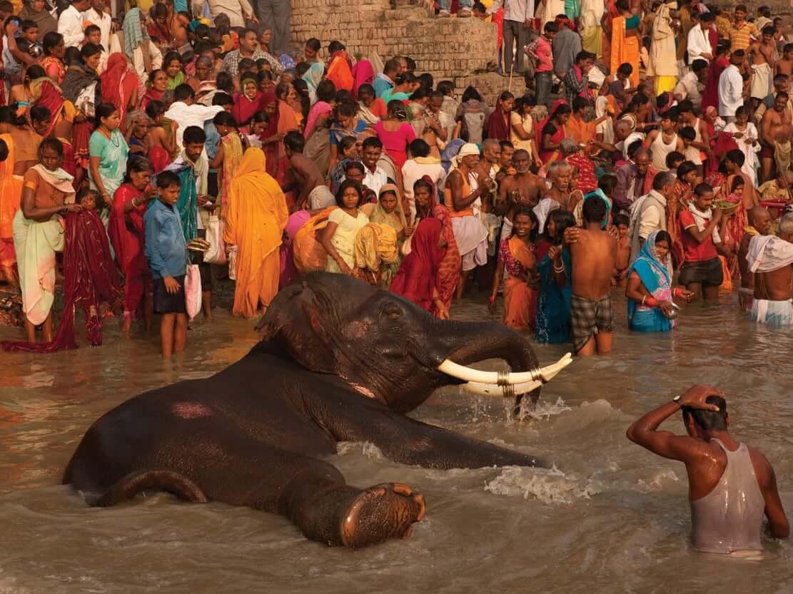 annete bonnier fotografia de animales elefantes