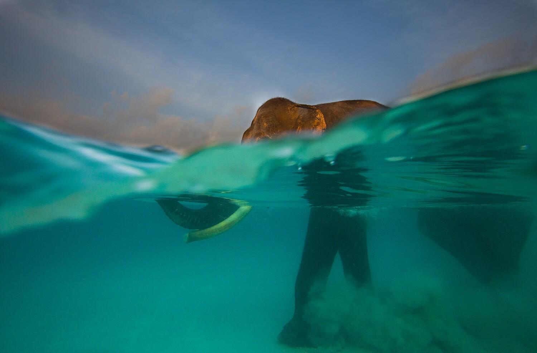 elefante en el agua fotografia de animales