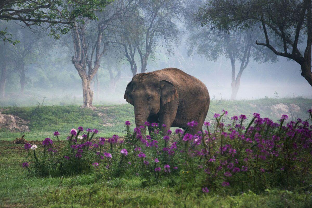 lefantes de la fotografia de animales de annete bonnier