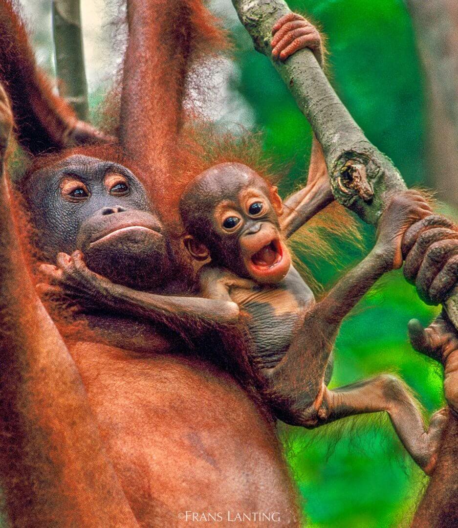 fotografo de animales salvajes Lanting
