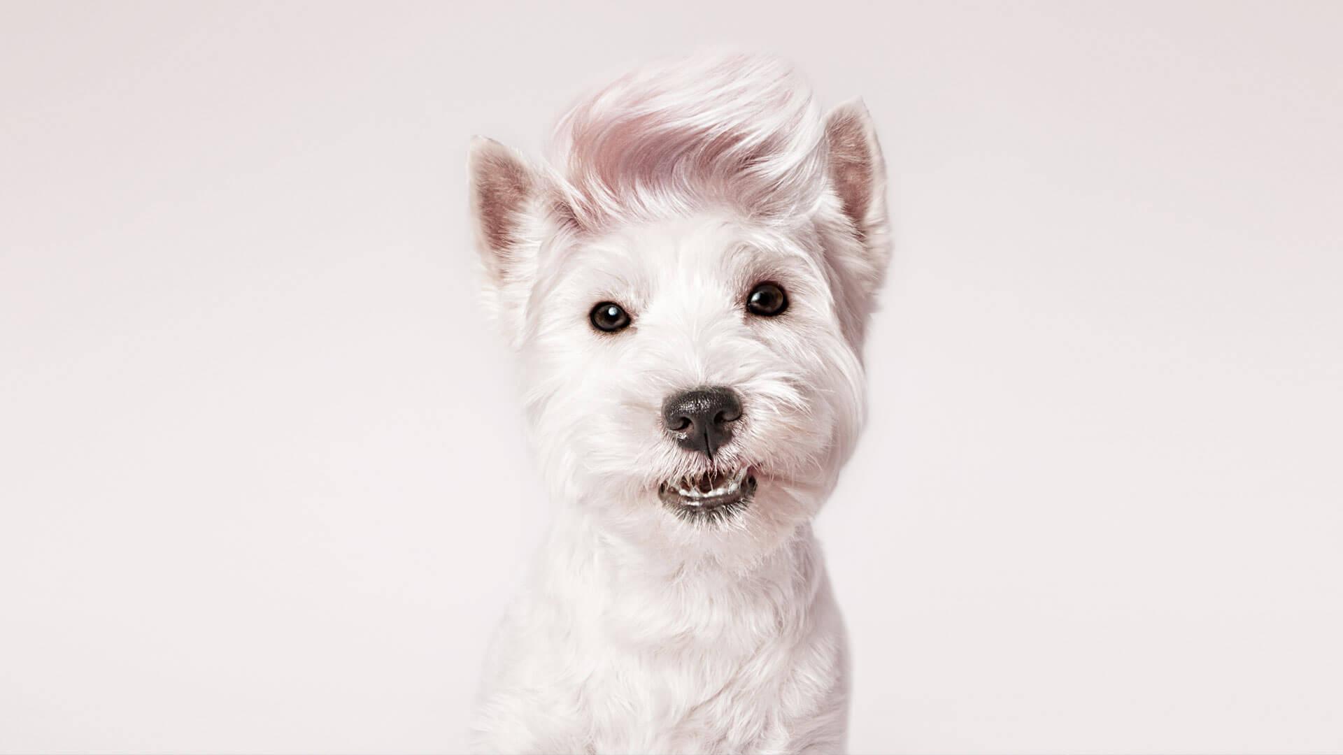 fotografo de mascotas santos roman perro
