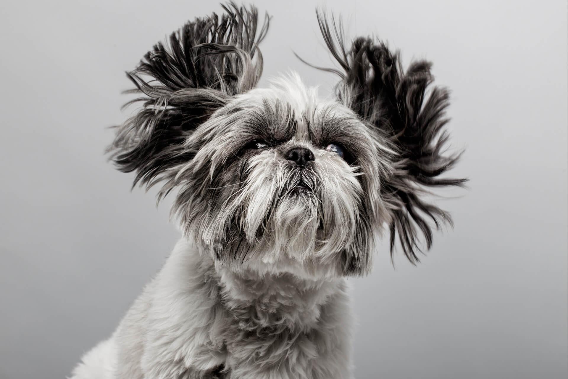 santos roman fotografo de mascotas