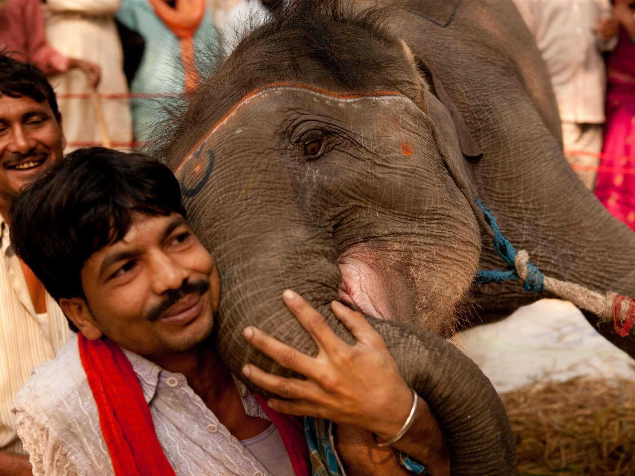 vinculo entre cuiddor y elefante annete