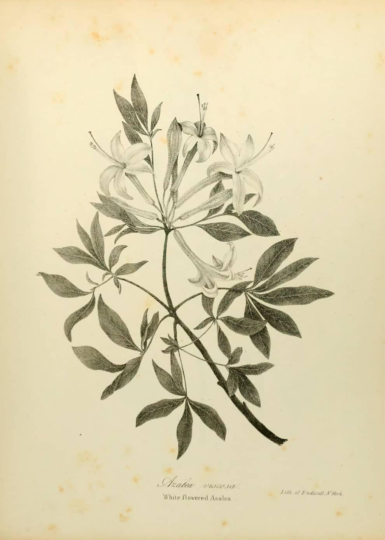 Dibujo de plantas de la biblioteca para biodiversidad